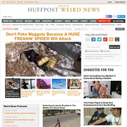Huffington Post Weird News 8